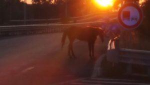 Ieri, un cavallo sull'asse attrezzato di Pescara