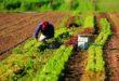 LAVORATORI AGRICOLI: IL 3 GIUGNO ALTRI DUE CHARTER A PESCARA SALGONO A 474 I LAVORATORI RIENTRATI DAL MAROCCO