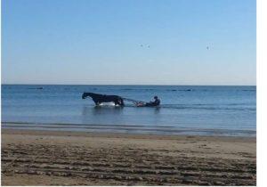 cavallo in mare con calesse