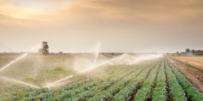 EMERGENZA BRACCIANTI AGRICOLI: IMPIEGARE NEI CAMPI CHI PERCEPISCE IL REDDITO DI CITTADINANZA