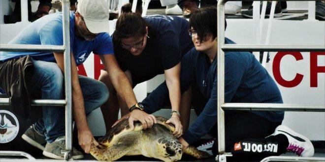 """""""La Tartaruga Lully è stata riportata in mare"""""""