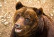 WWF LAV LAC: ORSO UCCISO DA FUCILATA  A PETTORANO SUL GIZIO IL 13 AL VIA IL PROCESSO DI APPELLO