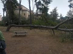 PESCARA – ORDINANZA DI CHIUSURA DELLA RISERVA PER CADUTI D'ALBERI