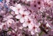 Meteo. Il volto più caldo e soleggiato della Primavera primeggia, martedì soffieranno venti più freddi