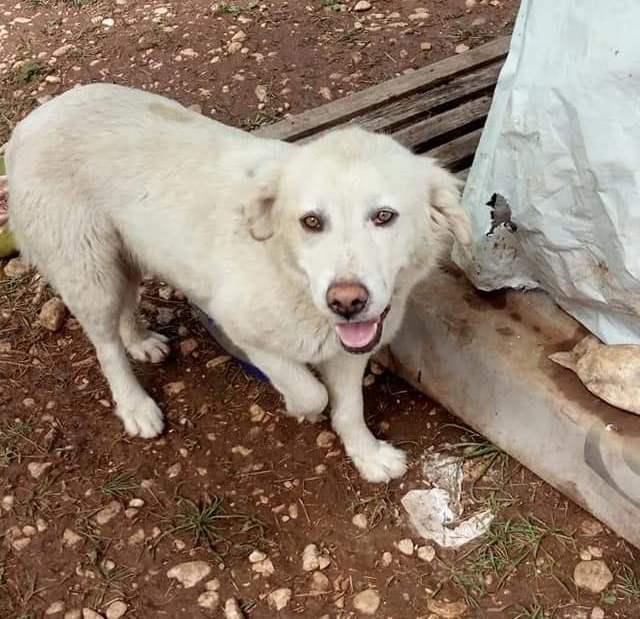 Adottare Un Cane Per Salvargli La Vita Lappello Arriva Da Trasacco