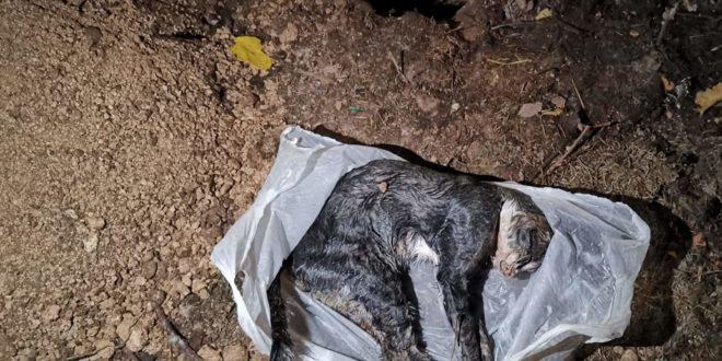 Avezzano.  Avvelenato il gatto di Nello Simonelli, ritorsione o solo il gesto di un malato?