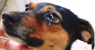 coronavirus cani abbandonati