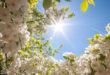Meteo. Splenderanno i volti soleggiati della Primavera, almeno fino a tutta Pasqua