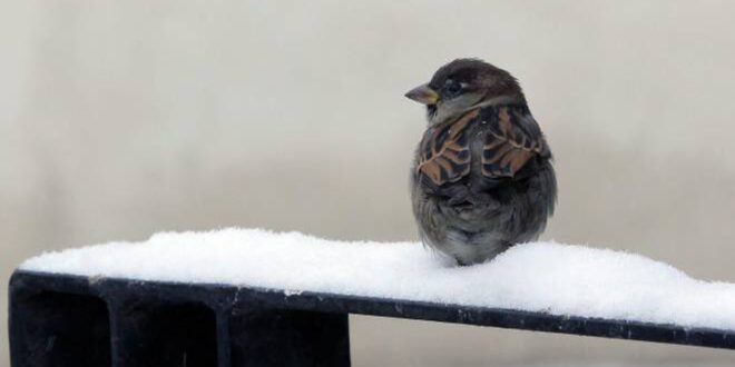 Meteo. Una massa d'aria gelida continuerà ad affluire. Tempo variabile e fiocchi di neve verso le adriatiche