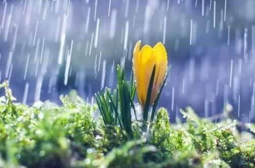 Meteo. Turbine di manifestazioni perturbate sui volti soleggiati del periodo, la Primavera  ci accompagnerà in questo modo verso l'Estate. Ecco che tempo farà